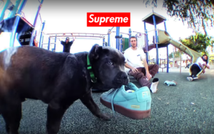 supreme king puppy